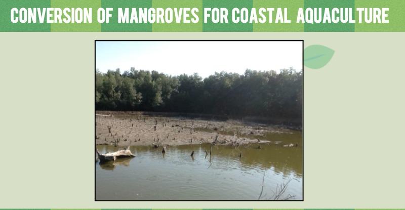 Mangrove-fig-2