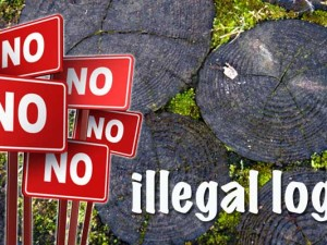 illegal_logging