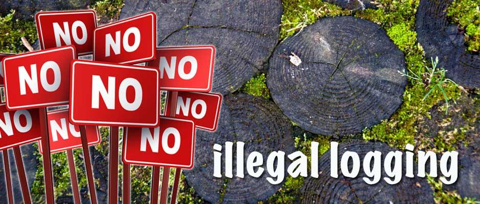 illegal na pagtotroso Ano ang maitulong mo para malutasan ang suliraning kapaligiran tulad ng ilegal na pagtotroso pangangahoyillegal na pagmimina - 775565.