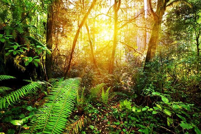 jungle_rainforest