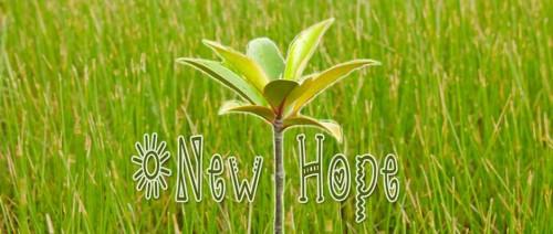 new_hope_mangroves