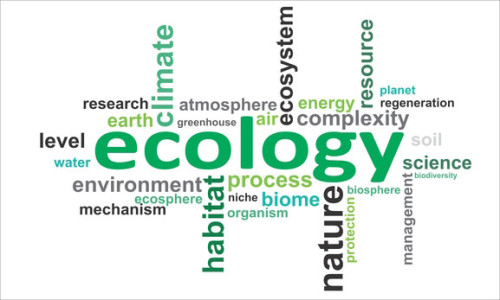 word-cloud-ecology